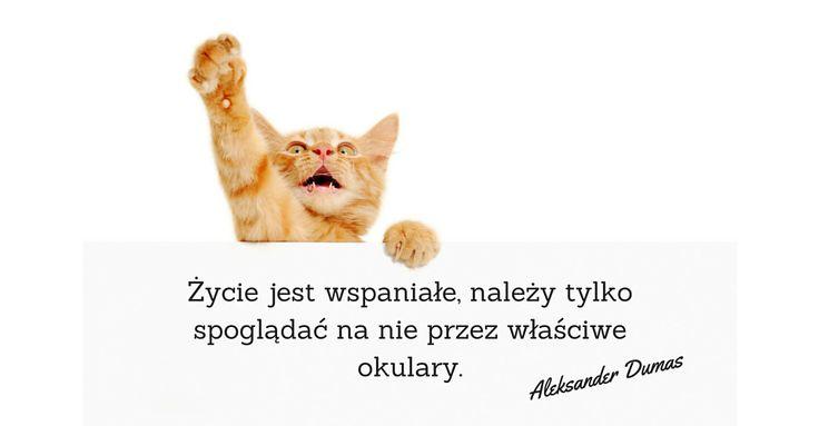 Kot na poniedziałek