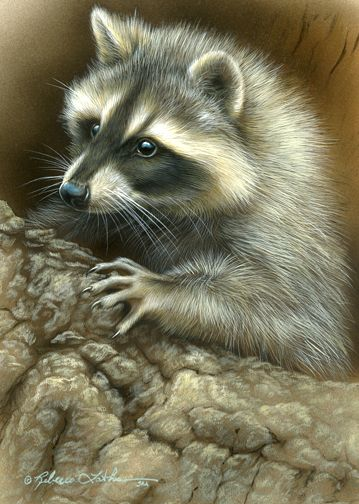 """""""A Little Mischief Racoon"""" by Rebecca Latham"""