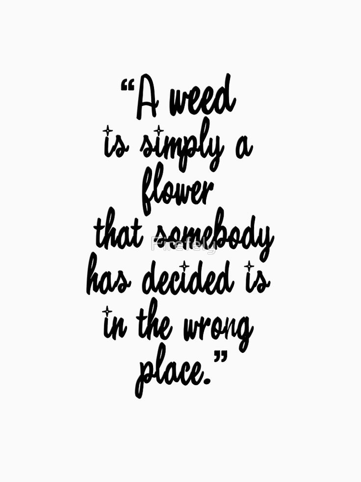 """""""A weed is simply a flower that somebody has decided is in the wrong place. """" Sister Monica Joan - Call the Midwife"""