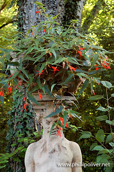 """Begonia """"Bonfire""""  Southern Garden photo from Phillipoliver.net"""