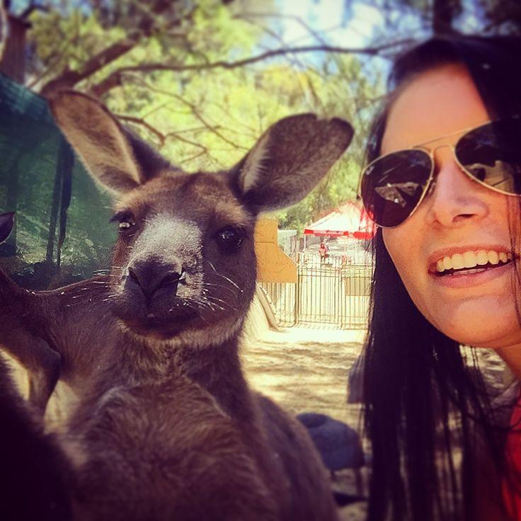 Kangaroo Selfie 📸✅