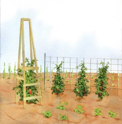 """simple wooden """"tomato ladders."""""""