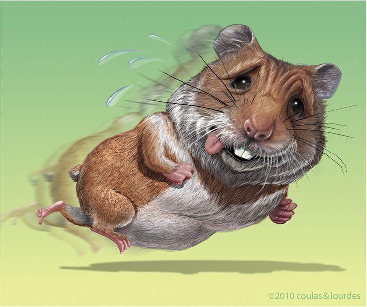 Mejores 42 imágenes de Hamster en Pinterest | Mascotas bonitas ...