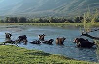 agrotikanew : Υπ΄ατμόν κτηνοτρόφοι και κτηνίατροι στο νομό Σερρώ...