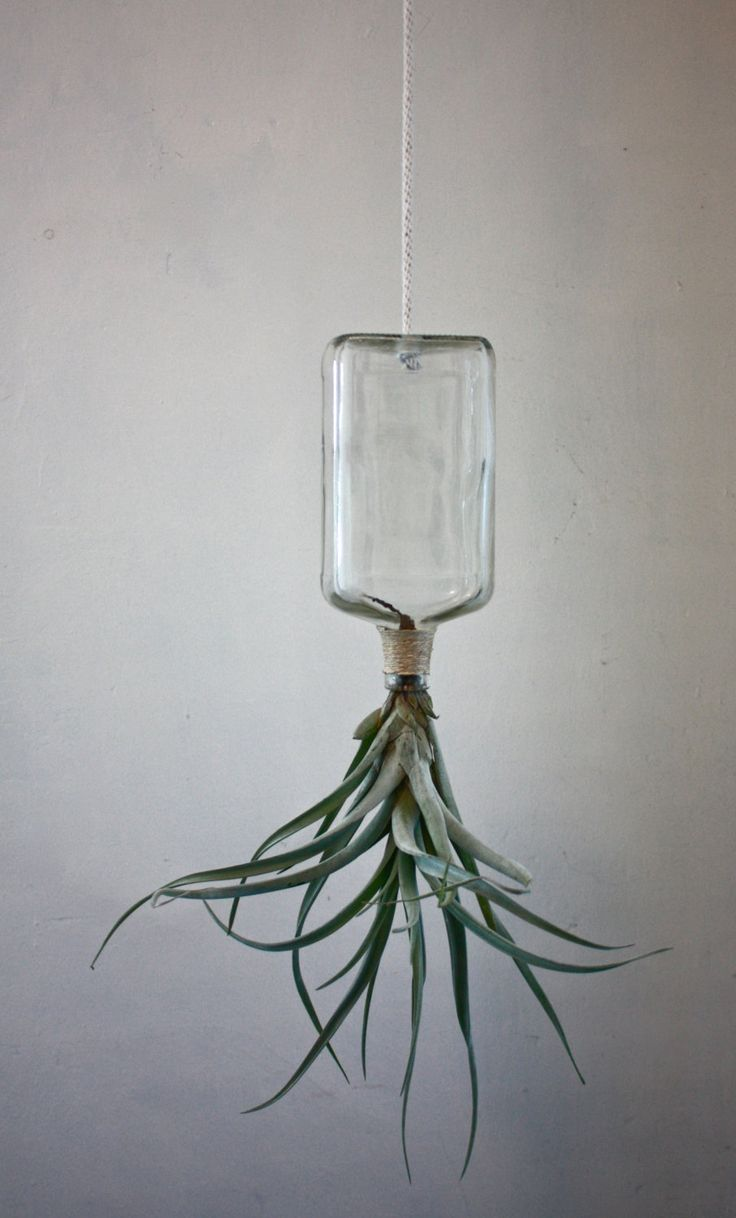 Upcycled Hanging Glass Bottle Planter with by PendulousBotanica, $30.00