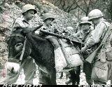 Una mula es cargada con una ametralladora de 30mm en Sicilia en 1943 #Segundaguerramundial #WWII