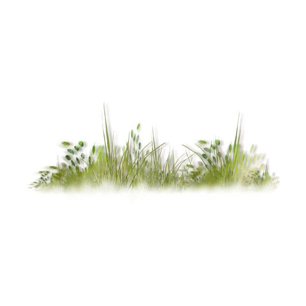 NLD Grass cluster.png ❤ liked on Polyvore