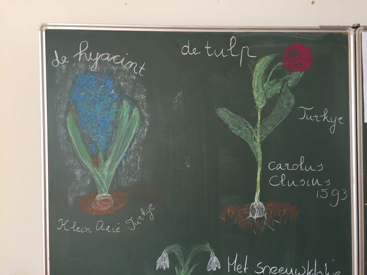Plantkunde: bolgewassen