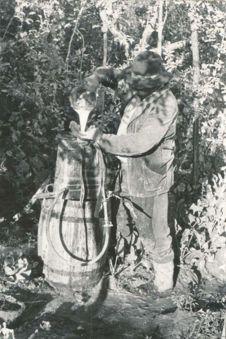 A permetlé felöntése a permetezőgépbe. 1966.