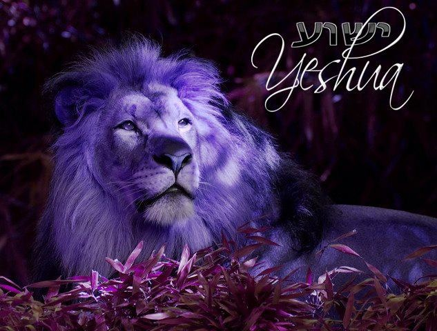 """And one of the elders said to me, """"Weep no more; behold, the Lion of the tribe of Judah, the Root of David, has conquered, so that he can open the scroll and its seven seals."""" Revelation 5:5 ♛"""