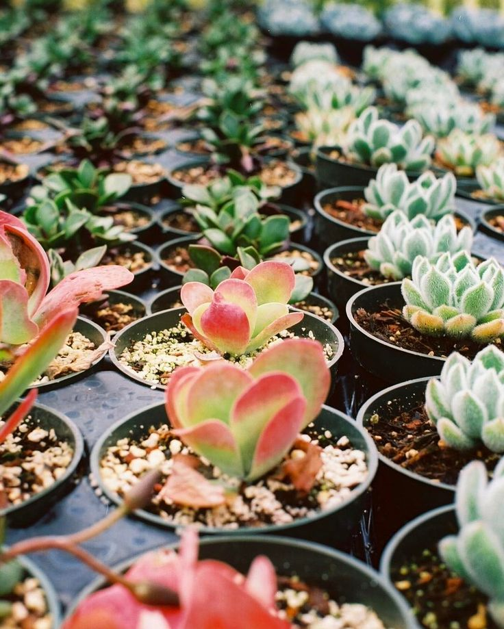 Fresh  Best Succulent Garden Ideas Around The World