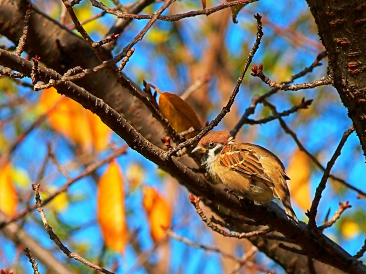 Basking in the sun of the sparrow.
