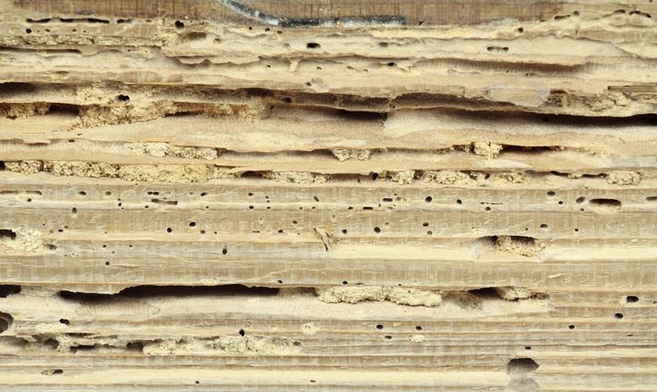 Rimedi naturali per eliminare tarli e tarme - Mentre i tarli si nutrono del legno, le tarme attaccano i nostri armadi: ecco come combatterli in modo naturale.