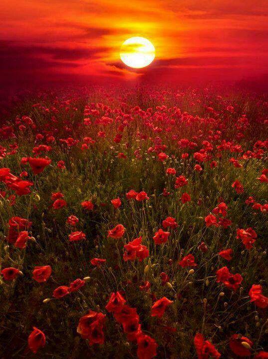 Red flowers #PCCanadaDay www.missdinkles.com