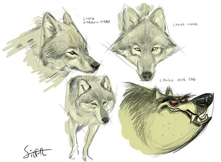 Silver Tips #creatures #wolf #drawing