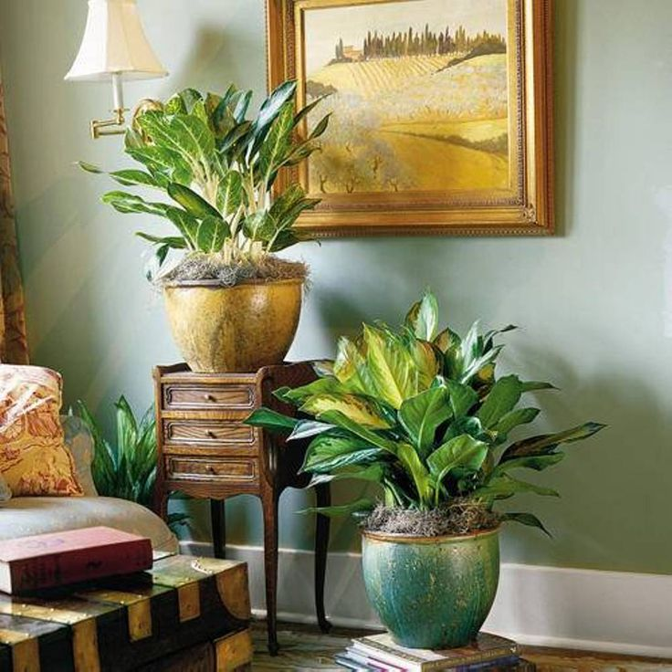 Home designs and decor beautiful amazing indoor plants living room chinese evergreens for Living room with indoor plants