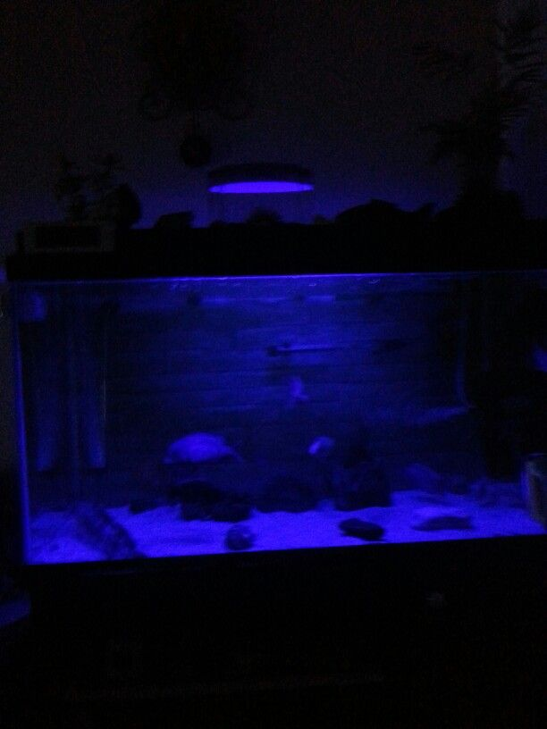 My aquarium with blue led light