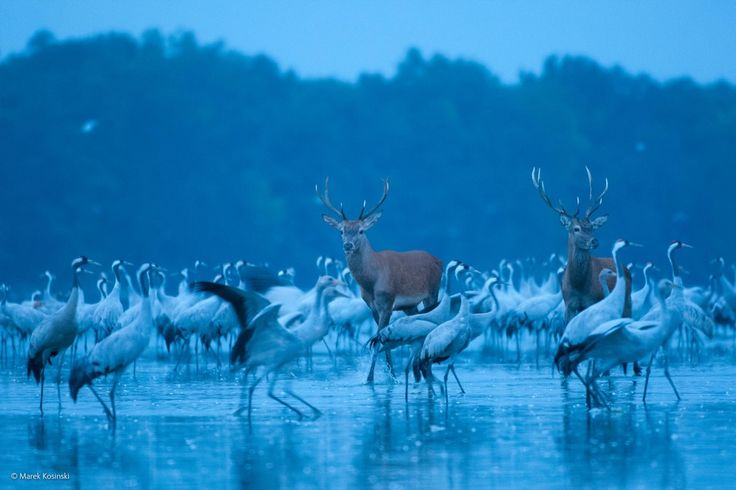 The Finalists For 2014′s Best Wildlife Photograph Are Absolutely Breathtaking! : LittleThings.com – Amazing Videos, Stories and News from around the world. It's the little things in life that matter the most!
