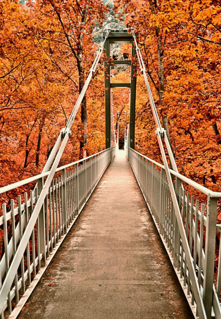 Autumn colours - Bridge in Tempi, Thessaly, Greece