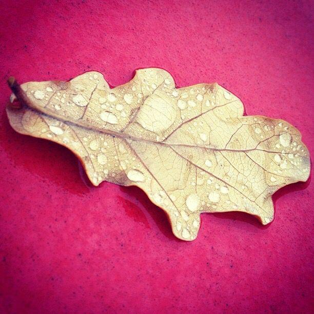 Fallen leaf on my car.  No filter.