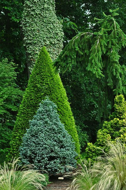 49 Best Designs With Trees And Shrubs Images On Pinterest - green tree garden design