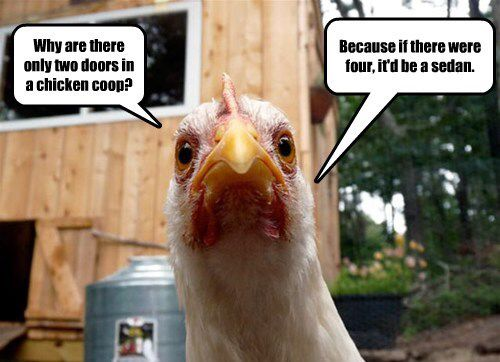 Anti Joke Chicken Sally: 94 Best CLUCKs And CHICKlets Images On Pinterest