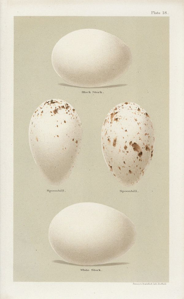 white draw eggs