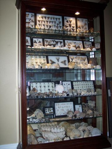 Fossil Display Case- fossils are cool