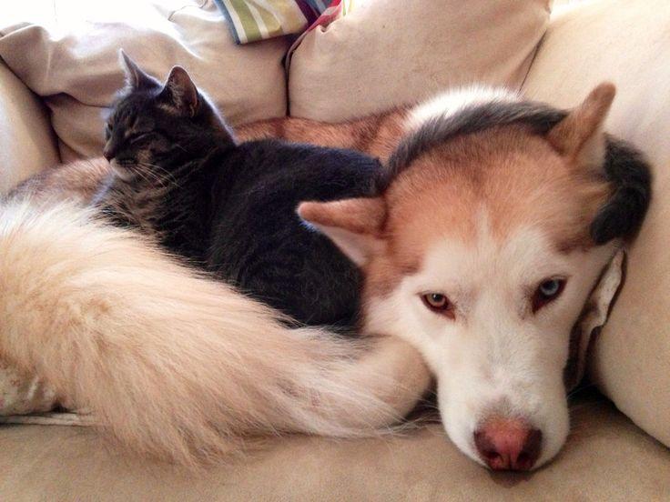 On vous a toujours dit que les chats et les chiens ne faisaient pas bon ménage? Eh bien on vous a menti! En effet, ces deux types de boules de poils s'entendent parfois même à m...