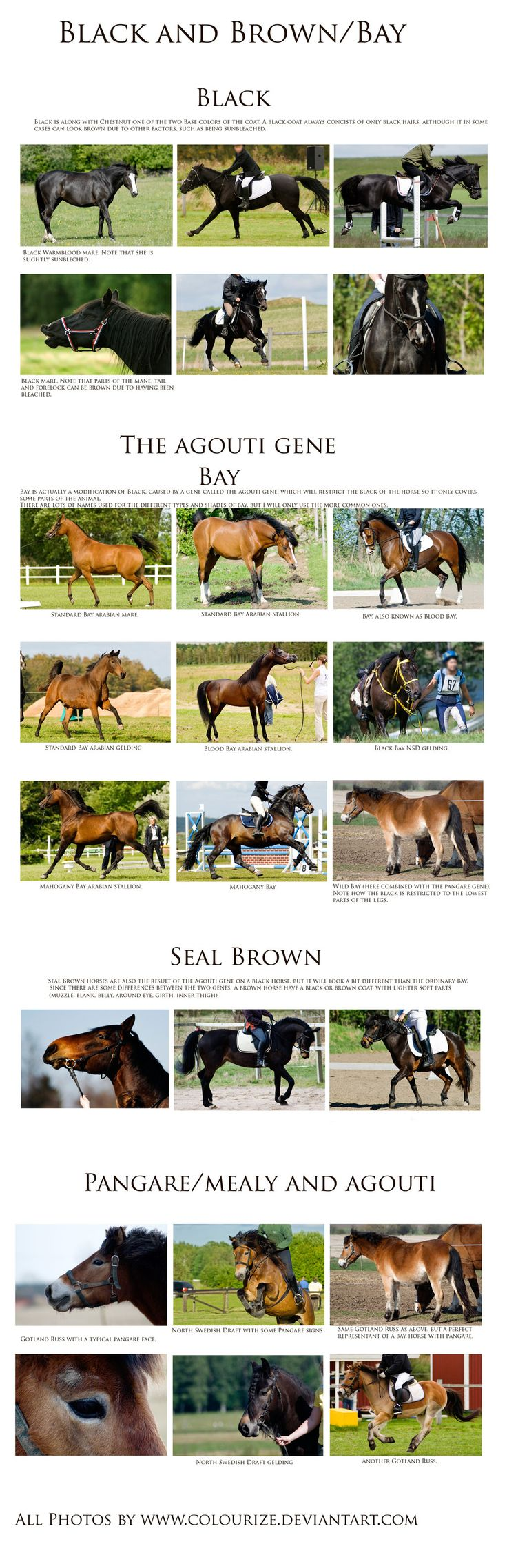 99 best pelajes de los caballos images on pinterest beautiful deviantart more collections like chestnut color genetics chart by magicwindsstables nvjuhfo Choice Image