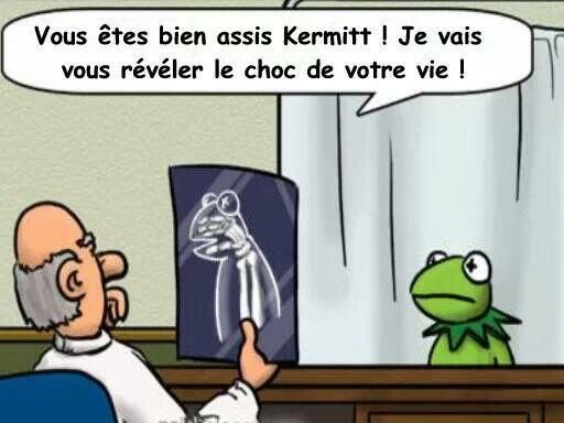 Radiographie de Kermitt la grenouille - http://www.2tout2rien.fr/radiographie-kermitt-grenouille/