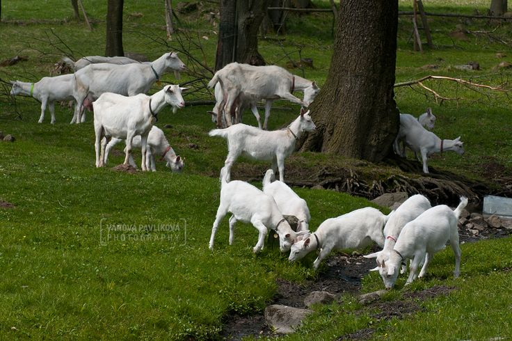 Horní Podluží - Žofín - Lambs https://www.google.com/maps/d/edit?mid=1megWioSlBxOtoyxeCINYrFYC8Pc&ll=50.885044082159005%2C14.556642014379917&z=18