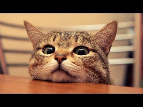 Kejadian Kucing Lucu Yang Bikin Ketawa