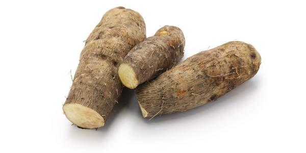 La dioscorea, nota anche come igname o yam, rappresenta un genere di piante coltivate in tutte le regioni tropicali del mondo a scopo alimentare. Produce una varietà di tuberi ricchi di amido che ricordano le patate dolci.