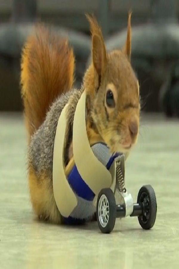 Where To Take An Injured Squirrel - Pestcare Jakarta