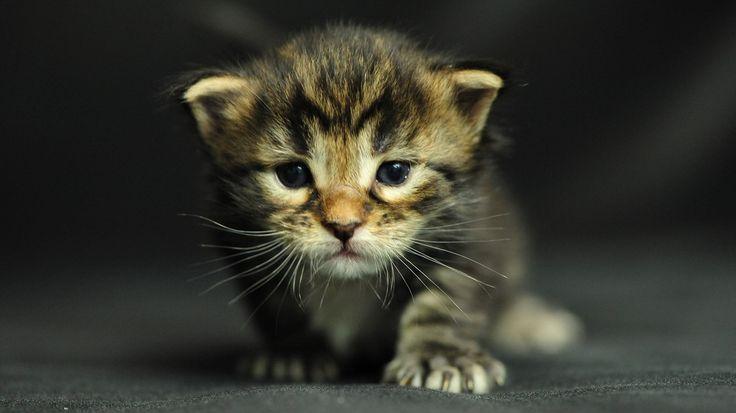 Free kitty pics 69
