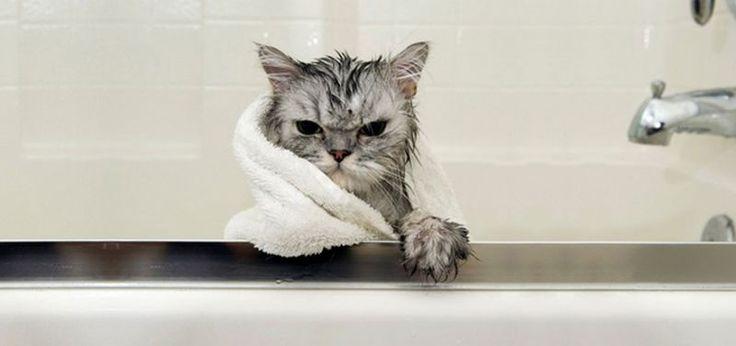 Смешное видео о кошках, приколы
