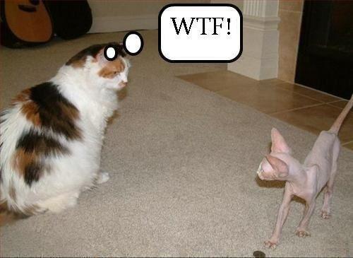 WTF?  LMAO!