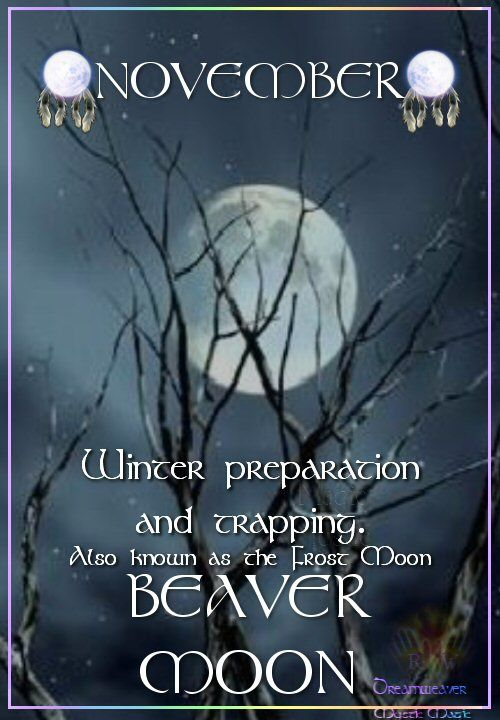 Moon:  NOVEMBER ~ BEAVER #MOON: Also known as the Frost Moon. Time for winter preparation and trapping.