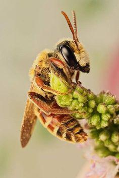 L'instruction en famille, c'est beaucoup d'imprévus, de spontanéité, et d'enthousiasme. Ce matin Zaza veut en savoir plus sur le miel et les abeilles...