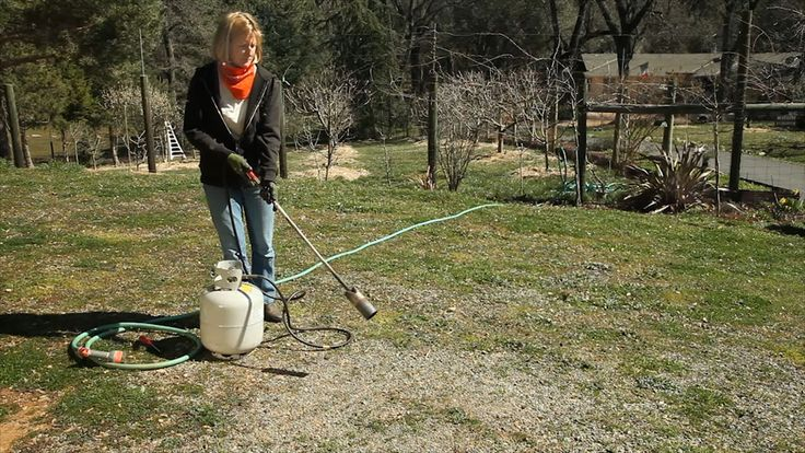 Organic weed control does NOT just mean getting on your hands and knees to pull weeds. We've got a whole slew of techniques to get rid of the weeds in your garden (without the 'R' word)!