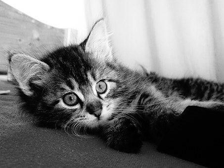 Macska, Fiatal, Kíváncsi, Pet
