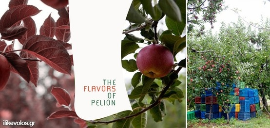 FLAVORS OF PELION photo by Yael Ilan