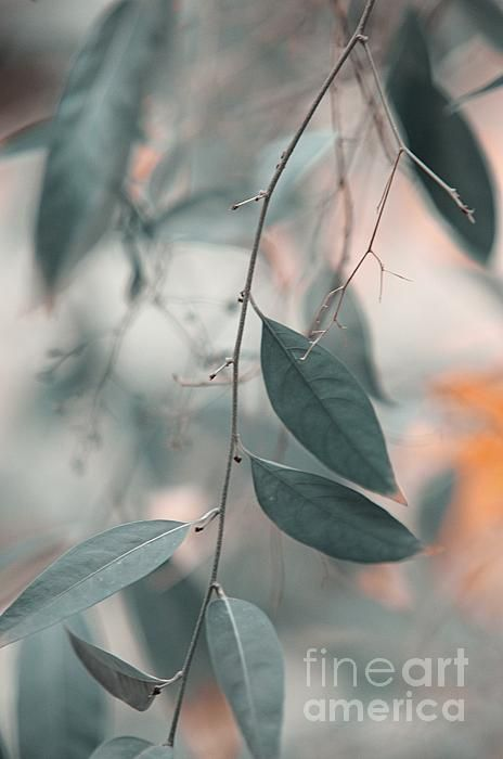 Airy Memories by Jenny Rainbow. #Leaves #Plant #Nature #FineArtPrints #Canvas #HomeIdeas #Blue #Pastel #Photography #WallArt#FineArtPhotography #JennyRainbowFineArtPhotography #HomeDecor