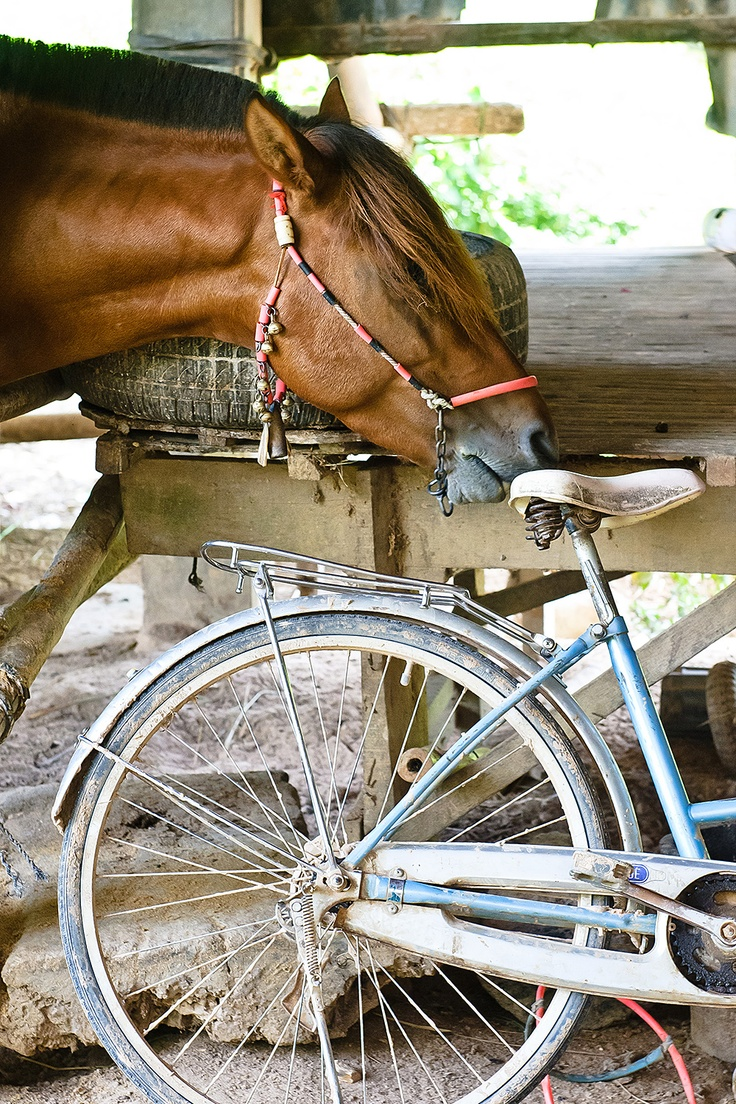 Caption this photo! For more info about our working equines programs, check out www.wspa.ca