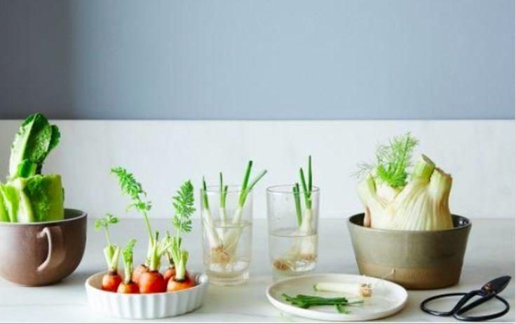 Frustrés de ne pas avoir de jardin ? Envie d'avoir votre petit potager à la maison ? Vous êtes de ceux qui n'ont pas la main verte et sont...