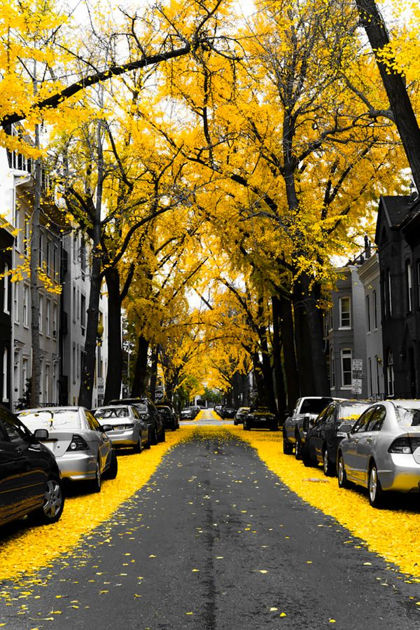 こんな道を毎日歩きたい! 世界の美しすぎる花や木に覆われた並木道