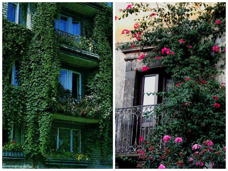 Вертикальное+озеленение+балкона:+20+идей+и+10+советов