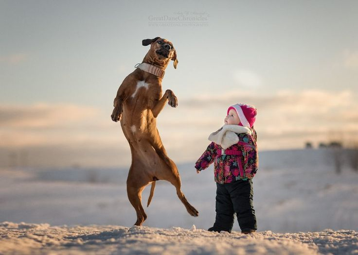 Best Fantastic Photography Andy Seliverstoff Images On - Tiny children and their huge dogs photographed in adorable portraits by andy seliverstoff