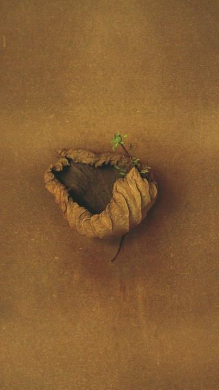 Dried leaf with new-growth ~ Photo by...Toshiro Kawase© 04.04.2012